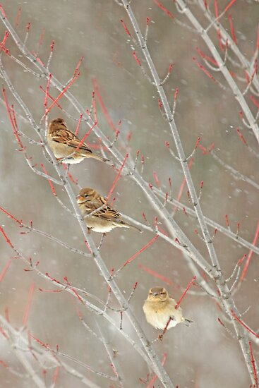 Three In A Tree ~ by Renee Blake