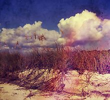South Carolina Sand Dunes by perkinsdesigns