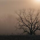 tree beneath the sun by dc witmer