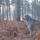 Hazard surveys his forest by SwampDogPhoto