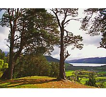 Bacaam Woods Photographic Print