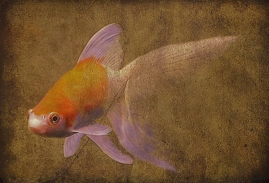 My Damn Big Goldfish by SuddenJim