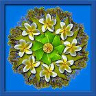 Frangipani Mandala by haymelter