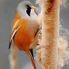 On The Winter Forage by CBoyle