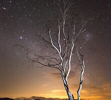 """Can't see the Forest for the Tree"" ∞ Lake Somerset, QLD - Australia by Jason Asher"