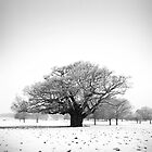 Ancient Oak, Richmond Park, England by Justin Foulkes