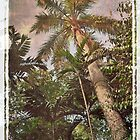 Palm tree by IngeHG