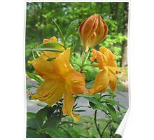 Orange Flower Bush Poster