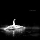 """"""" The Swan """" by Richard Couchman"""