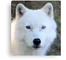 Beautiful Face of an Arctic Wolf Metal Print