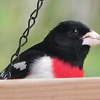 Red Breasted Grosbeak by Martha Medford