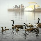 Fogbound Geese by Mikell Herrick