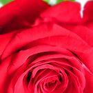 In Memory of Mom by M-EK