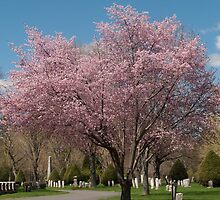 Blossoms - Laurel Hill Cemetery - Saco ME by Connie Thomase