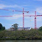thee cranes ov Brisbane 2013 DAILY TOUR - Day 39 by Craig Dalton