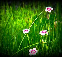 Waiting for Spring ! by Elfriede Fulda