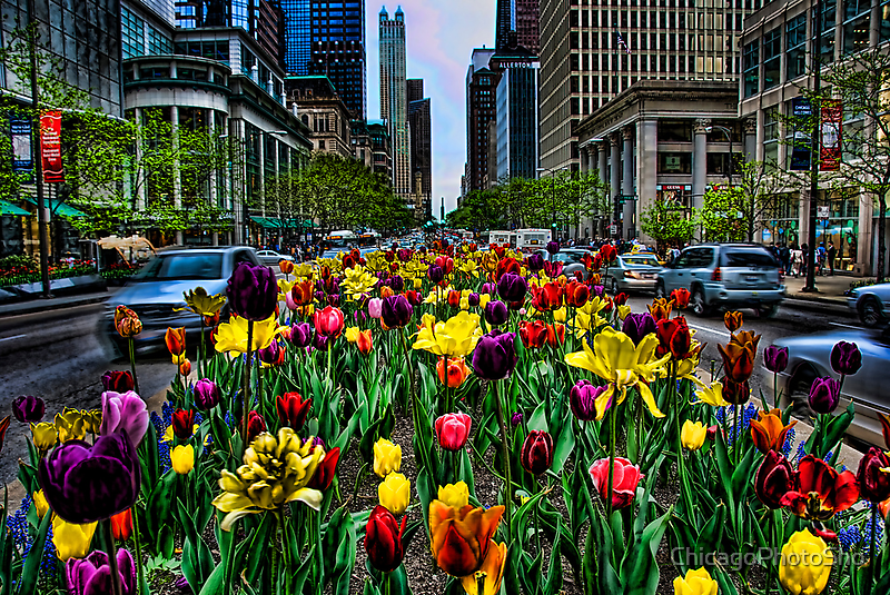 Michigan Ave Tulips, Chicago by ChicagoPhotoSho