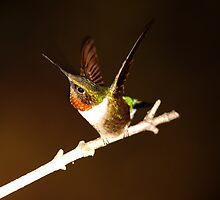HUMMINGBIRD IN SPOTLIGHT by Randy & Kay Branham