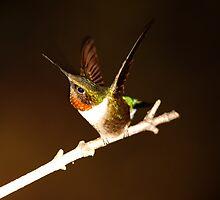 HUMMINGBIRD IN SPOTLIGHT by Randy & Kay Branham