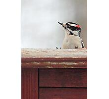 Hairy Woodpecker ~ Photographic Print
