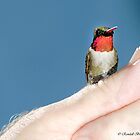 TRUST HUMMER ON MY THUMB by Randy & Kay Branham