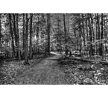 Forest 2 Photographic Print