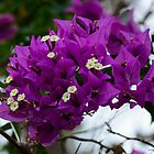 More purple flowers by Mark Fendrick