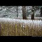 Wooden Fence Covered With Snow by © Sophie W. Smith