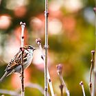 Sparrow On Lilac Bush by Shane Laing