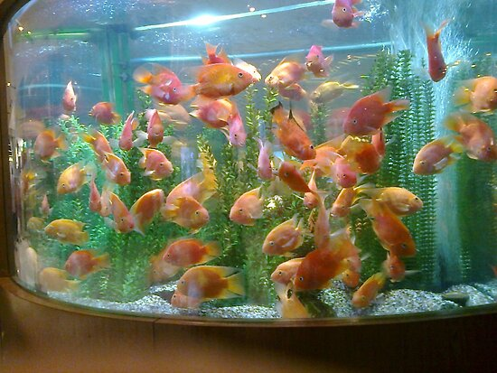 Crown fish by AmandaWitt