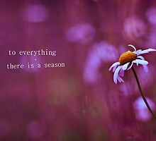 to everything a season by Maria Söderlund