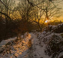 Snowy Lane by Phil Tinkler