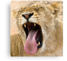 The Perfect Yawn Canvas Print