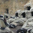 penguins by sanngat