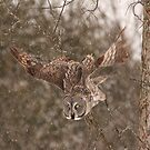 Great Grey Owl in flight - Ottawa, Ontario by Josef Pittner