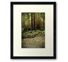 Muir Woods Sentinels Framed Print