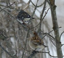 The Junco and The Sparrow In The Snow by Tracy Faught