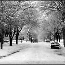 Everything is pretty when covered by snow © by Dawn M. Becker