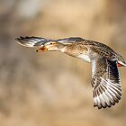 Mallard Female: Breeding Season by John Williams