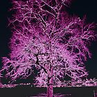 Oak in Neon Purple by ©The Creative Minds