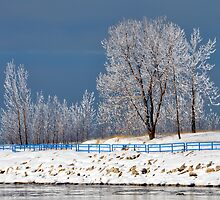 Frosty Trees by BarbL