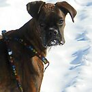 Cassius in the snow... by Jeanette Muhr