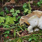 Mushroom And Leaves by CADavis
