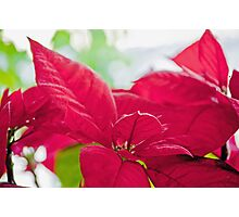 FLOWER LEAVES Photographic Print