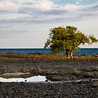THE TREE IN THE OCEAN. by HanselASolera