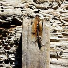 rusty nail. by HanselASolera