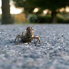 Silent Grasshopper on Fall Road by aebritton
