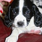 Mabel at 7 Weeks by Paul Morris