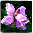 pretty purple flowers by kbenecke75