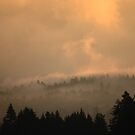 Sunrise Through The Foggy Land by Akana